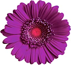 product image for Next Innovations Purple Daisy Wall Art