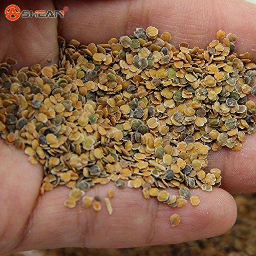 Mixed Couleur Violet (Rouge Vert Violet) Plantes de jardin Graines Matthiola Incana Fleurs Herb annuel des semences 50 particules / lot