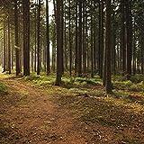 Sons Forestiers, Oiseaux Chanteurs Et Vents Doux Pour Un Meilleur Sommeil