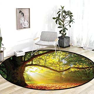 Outdoor Rugs Leaves Forest Decor Majestic Mighty Oak Tree with Largely Broader Sun Beams Rays Nature Green Light Yellow and Orange Desk Chair mat for Carpet 3'Round