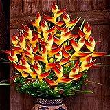 Green Seeds Co. Planta de interior en maceta Flor naranja Strelitzia Reginae bonsai Ave del paraíso bonsai Jardim Bonsai Sementes 100 Partículas/Lote: Rojo