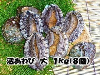 活蝦夷あわび 大 1kg(8個) 養殖