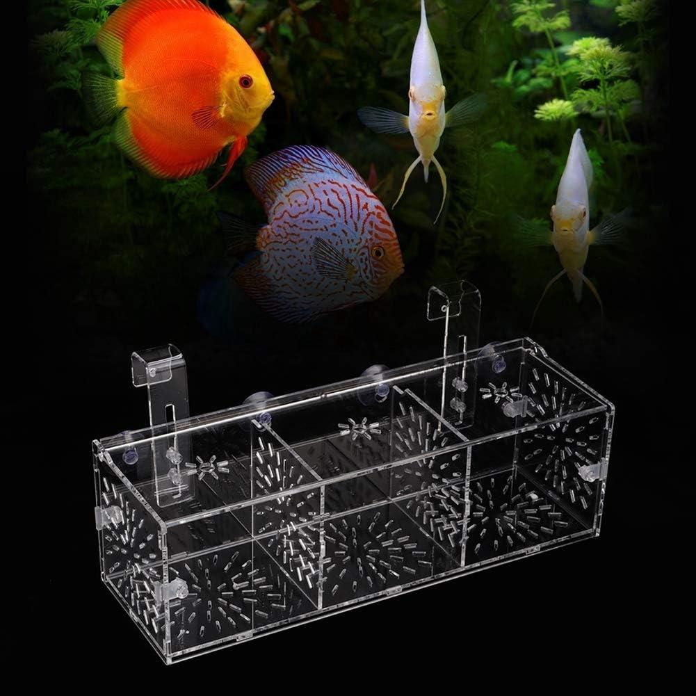 Caja de Aislamiento ecol/ógica para Peces incubadora de criadero de acuarios para Peces peque/ños Baby Clownfish para camarones beb/é Guppy 30CM*10CM*10CM