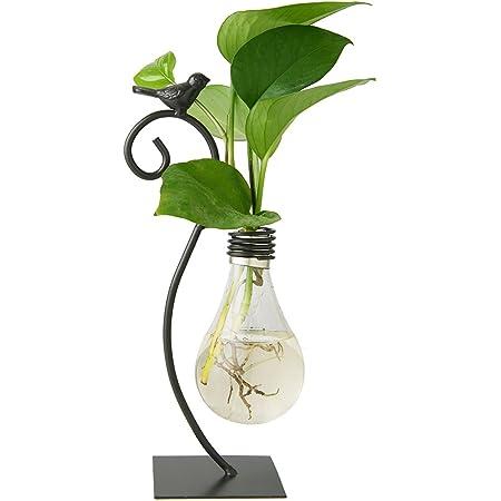 Marbrasse Desktop Glass Planter Hydroponics Vase,Planter Bulb Vase with Holder for Home Decoration,Modern Creative Bird Plant Terrarium Stand, Scindapsus Container (Bulb Vase)