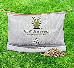 best lawn seed to buy