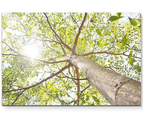 Paul Sinus Art Leinwandbilder | Bilder Leinwand 120x80cm Baumkrone im Sonnenlicht
