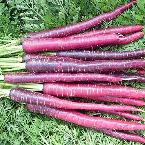 100 / pcs super Grosses graines de carotte Bonsai géant carotte Semences potagères et les graines de fruits Graines bio Hygiène pour jardin Gris foncé