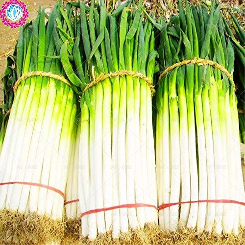100 pcs / sac géant graines d'oignon vert légumes Semences biologiques ingrédients de cuisine plante en pot bonsaï pour le jardin à la maison facile à cultiver