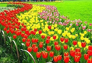 Pinkdose bulbos de tulipán verdaderos, la variedad tulipanes bulbos frescos, bulbos de flores de alta calidad con bulbo casa raíz de la planta de jardín - 106pcs: 3