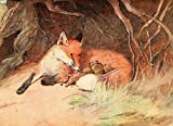 The Poster Corp Cecil Aldin – White Ear & Peter 1912 Fox