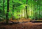 wandmotiv24 Carta da parati Foresta estate natura XXL 400 x 280 cm - 8 pezzi Carta da parati fotografica, murale, carta da parati a motivi, carta da parati in tessuto non tessuto M5667