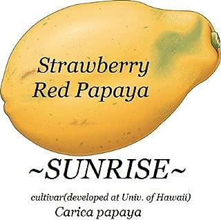 30 Sunrise Strawberry Red Papaya Hybrid Sunup Solo Best Uh Cultivar Seeds HD7