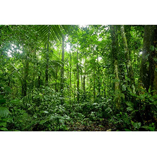 YongFoto 10x7ft Jungle Forest Trees Backdrops for Photography Summer Woods Wonderland Trees Plant Spring Nature Landscape Photography Background Picnic Camping Girl Boy Scouts Adventure Photo Studio