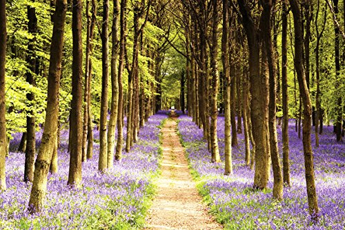 POSTER STOP ONLINE Woodland Path - Nature Poster/Print (Trees & Lavender) (Size 36' x 24')
