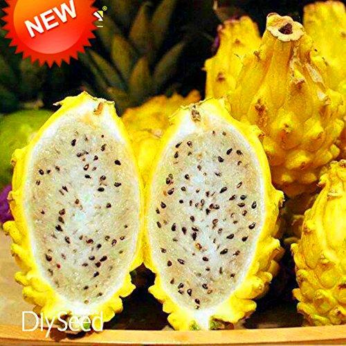 Best-vente! 100 PCS / Graines Lot Jaune Pitaya arbres fruitiers Plantes vivaces non-ogm Hylocereus Dragon Fruit Graines, # IXJVEU