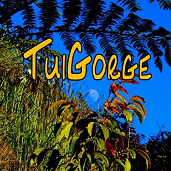 Tuigorge