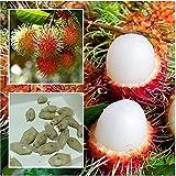 ランブータンの種5pcsタイランブータンの種トロピカルフルーツライチ植物屋外野菜果物観賞用の家庭の木子供の種