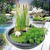 Heissner 015165-00 Wassergarten-Set inkl. Pumpe