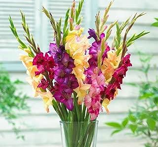 Mardi Gras Mix Large Flowering Gladiolus 10 Bulbs