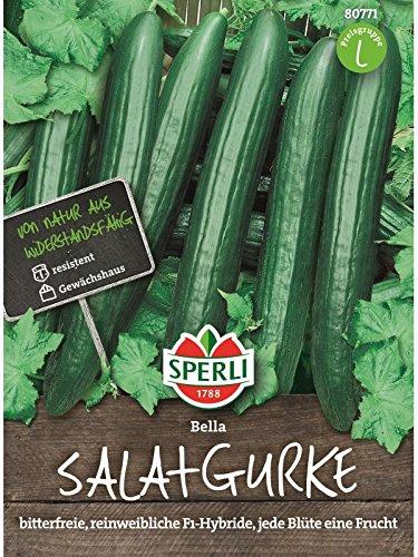 Gurke Salatgurke Bella F1 rein weiblich