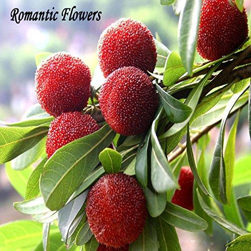 10 particules/semences Sac madroño madroño Chine chère fruits pour la Sana et Home Garden Grow facile
