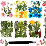 92 Pieces Real Dried Pressed Flowers Set Natural Pressed Dry Flowers Colorful DIY Dried Flowers Mixed Dry Flower and Leaves with Tweezer for Nail Resin Craft Scrapbooking Supplies DIY Floral Decors
