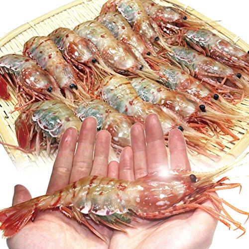 特大 子持ち ボタンエビ 1.0kg お刺身用の高級海老 プチプチの卵が絶品