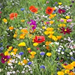 100g Meadow Wild Flower Seeds All Soil Types by Pretty Wild Seeds 80/20 Mix 28a 80% Wild Flowers