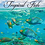 Tropical Fish 2022 Wall Calendar