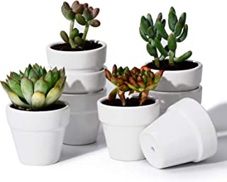 Potey Mini Ceramic Plant Pots - 2.2 Inch Tiny Planters for Succulents Cactus Glazed Indoor Container with Drain Hole - Set of 8, White