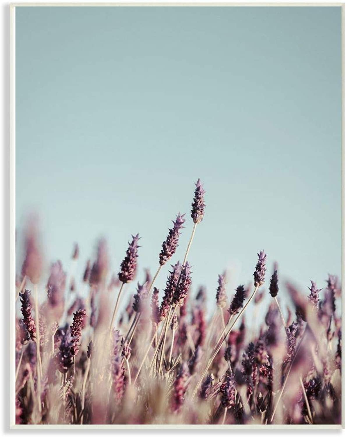 The Stupell Home Decor Collection pap-112_wd_12x18 Close Up of Field Plants Photography Wall Plaque Art, 12 x 18