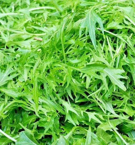 Approx 24000 Seeds of Herb Rocket Wild