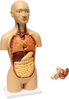 MonMed Human Torso Model – 17in Human Body Model Anatomy Doll with Removable Organs 3D Human Organ Model