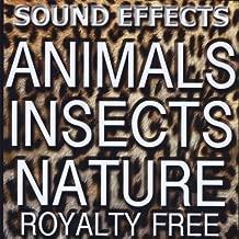 Zoo Sounds, jungle