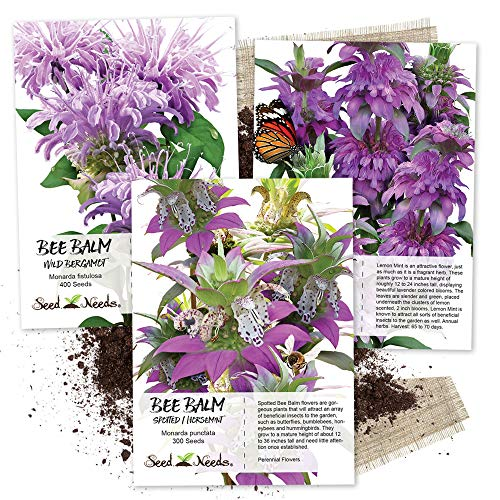 Seed Needs, Bee Balm Seed Collection (3 Individual Packets) Untreated Seeds