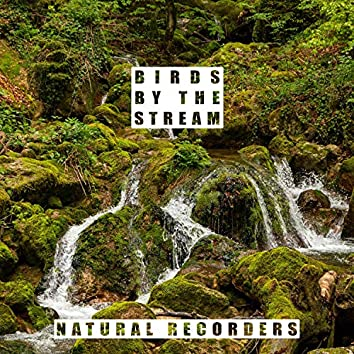 Birds by the Stream