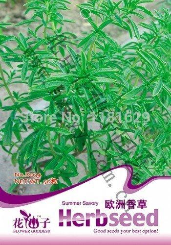 (Mélanger l'ordre minimum 5 $) 1 paquet originaux 50 pcs Summer Savory Herb Graines