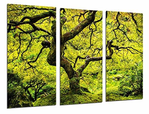 Cuadro Fotográfico Arbol Japones Naturaleza Otoño, Tronco y Ramas Verde Tamaño total: 97 x 62 cm XXL