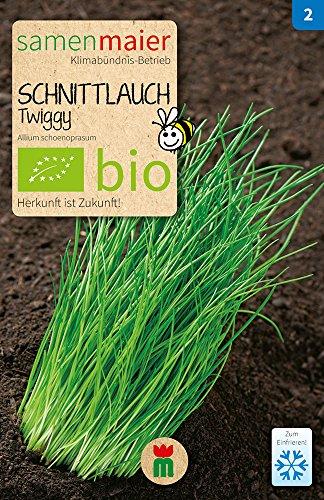 Samen Maier 848 Schnittlauch Twiggy feinröhrig mehrjährig (Bio-Schnittlauchsamen)