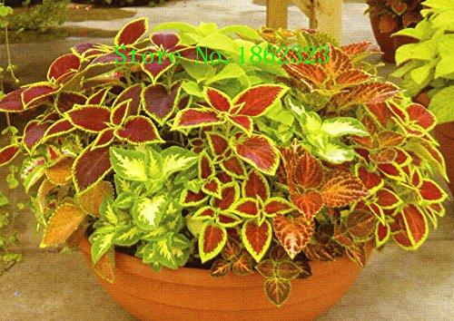 100 Graines Pcs Un sac Dendrobium, pot de fleur de semences Dans Bonsai plantes d'orchidées rares Les Budding Taux 95% Couleurs mixtes