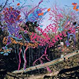Songtexte von Animal Collective - Here Comes the Indian