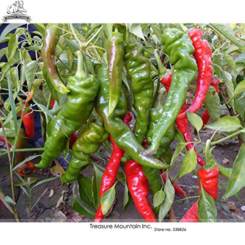 intestinos de cochon 'Vegetable Seeds long tordue Hot Chili Pepper, paquet original, 30 graines/paquet, semences hybride
