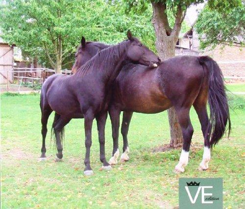 EM Lösungen kompakt: Pferde