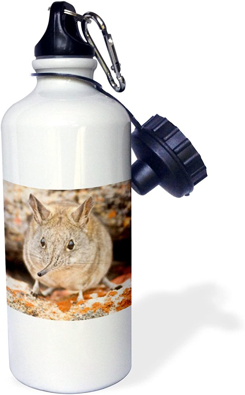 3dpink wb_76284_1 Cape Elephant Shrew, Bushmans Kloof, South AfricaAF42 RBE0002Ralph H Bendjebar Sports Water Bottle, 21 oz, White