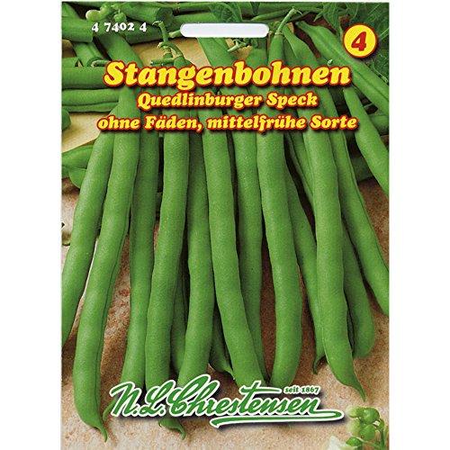 Stangenbohnen 'Quedlinburger Speck' mittelfrüh, grün, ohne Fäden