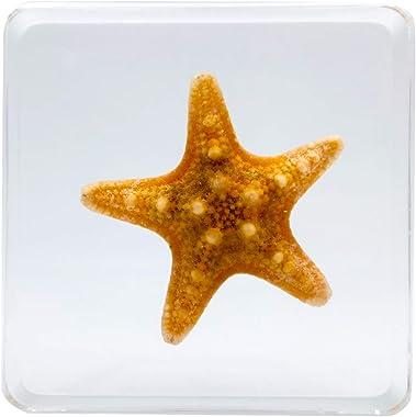 LOOYAR Cute Real Starfish Sea Resin Paperweight Desk Decoration Taxidermy Animals Biology Anatomy Educational Teaching Tool T