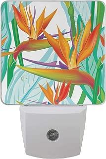 XinMing Birds of Paradise Flower White LED Sensor Night Light Super Bright Power Dusk to Dawn Sensor Bedroom Kitchen Bathroom Hallway Toilet Stairs Energy Efficient Compact(2 Pack)
