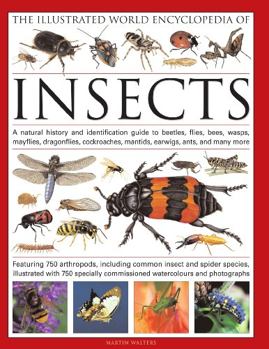 The Illustrated World Encyclopedia of Insects
