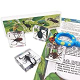 WhizKidsLab 4PZAS Juego Insectos Reales Resina Arácnido Espécimen Stem Set Bichos Lupa Póster Datos Curiosos