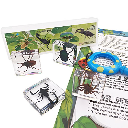 WhizKidsLab 4-teilig Reale Wanzen Insekten Arachnid Harzprobe STEM Set Lupe Merkblatt-Plakat